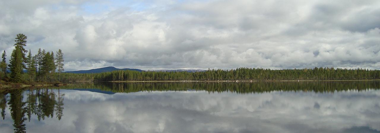 skogsfastigheter till salu